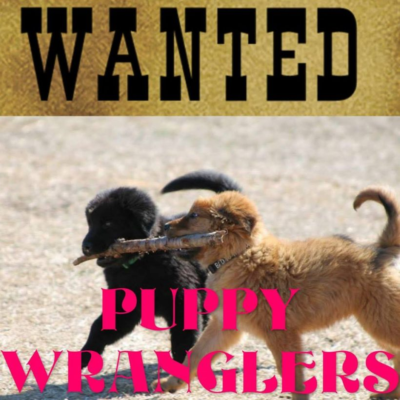Puppy Wranglers Wanted!