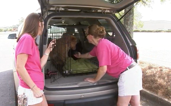Street Paws finds puppy abandoned in carrier
