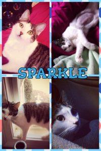 Sparkle 11-29-13